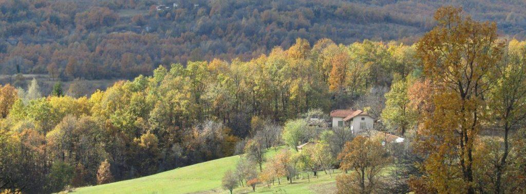 Field Target Bulgaria